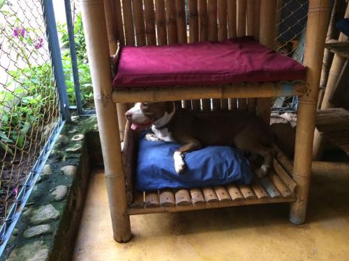 2018-05 - Hunde-Schlafnischen