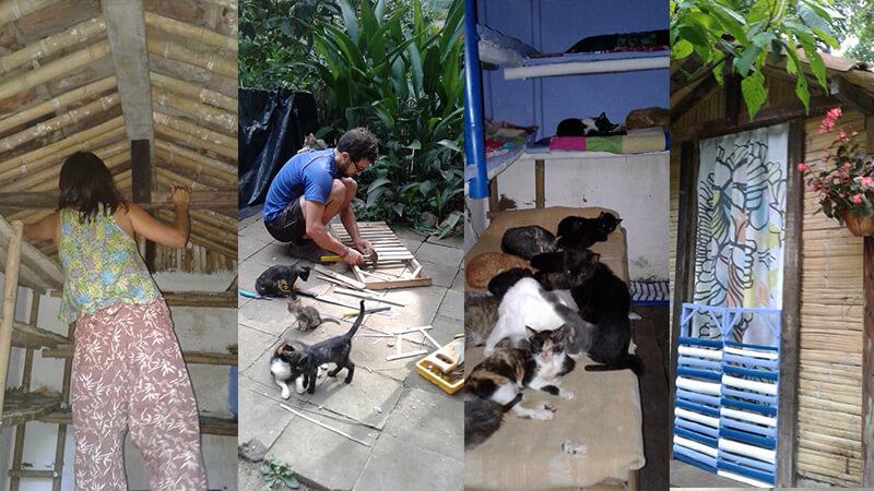 Renovierung des Katzenhauses